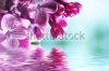 stock-photo-macro-image-of-spring-lilac-violet-flowers-with-water-reflection-abstract-soft-floral-backgr